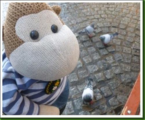 pigeons in shrewsbury 3