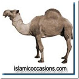 camel1[3]