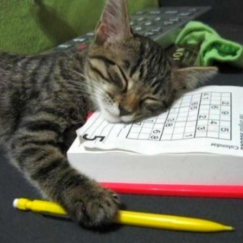 Kucing Stres Ngerjain Tugas