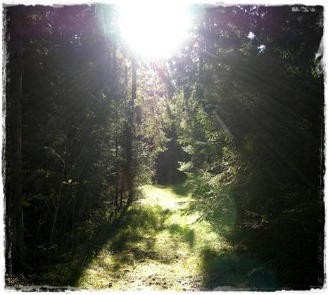 1 skogsglänta