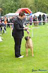 20100513-Bullmastiff-Clubmatch_30939.jpg