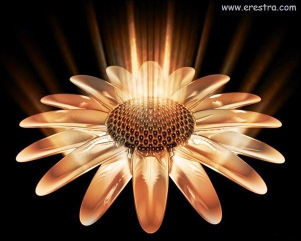 sunflower-normal5.4