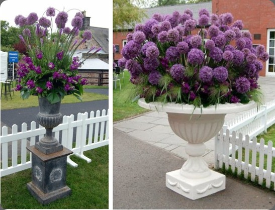 Musselburgh Racecourse - Planet Flowers - Edinburgh Cup (2) alliums