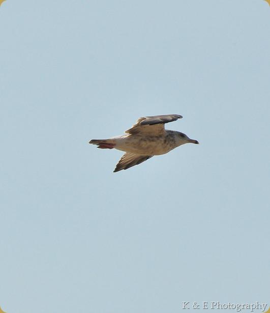hawkcliff_Ken-5