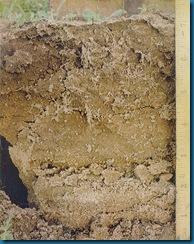soil-1bg