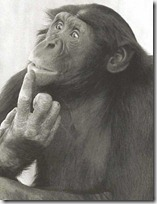 monos piensan blogdeimagenes (15)