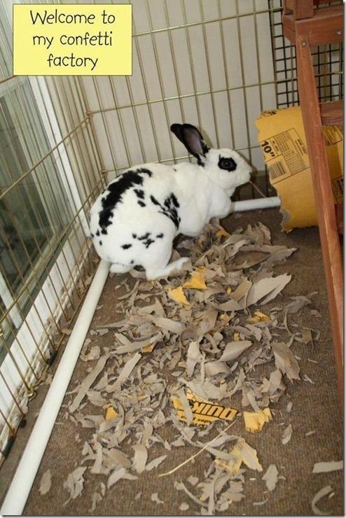 bunny-rabbit-shaming-15