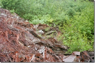 259159934 Collapsed Snowshed Ruins near Milepost 1713 on the Iron Goat Trail in 2002
