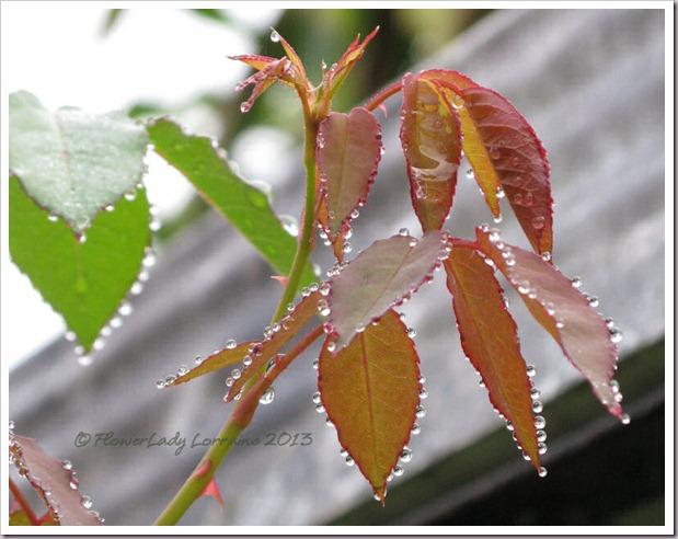02-24-raindrops