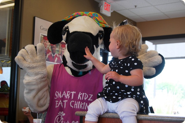 Chick Fil A Cow Day-3