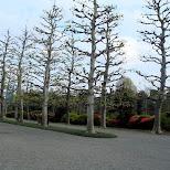 the french garden at Shinjuku Gyoen in Shinjuku, Tokyo, Japan
