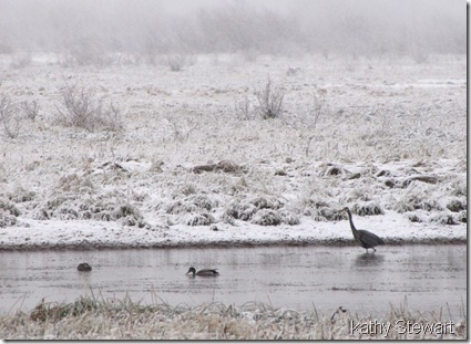 Heron and Mallard in the snow