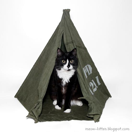 Cat Field Tent