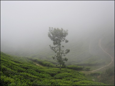Munnar Day Out VIII