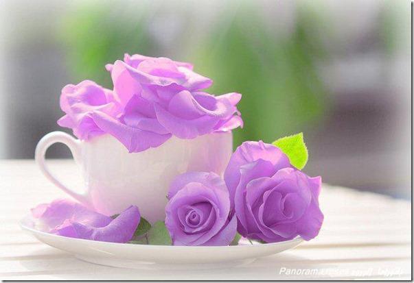 lilas-rosas-flores-facebook-tumblr-5