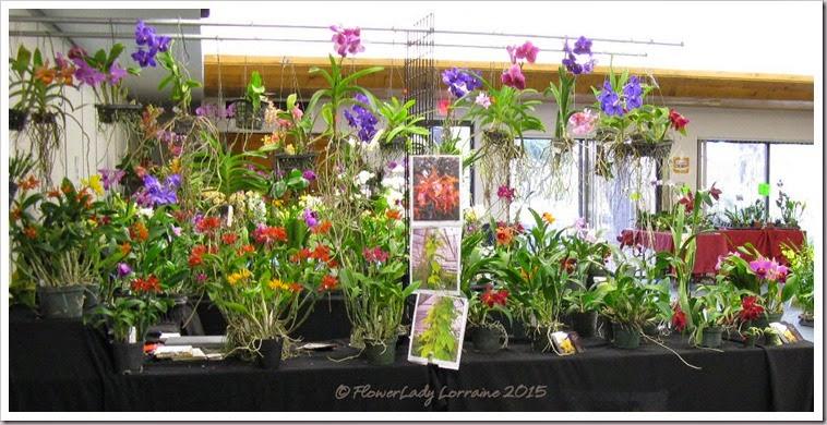 02-08-orchids3
