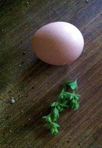 use egg 1