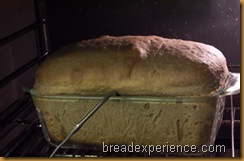 sprouted-wheat-bread 033