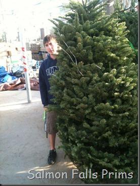 christmas tre 2011