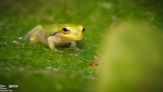 treefrog-8084