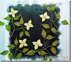 Kousa Dogwood, a work in progress by Sue Reno, Image 6