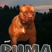 puma_15m.jpg