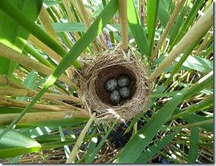REEWA nest