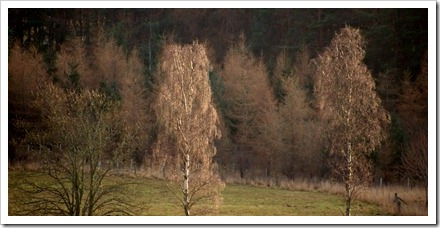 11 Jan 6 31-12-2011 14-27-56.ORF