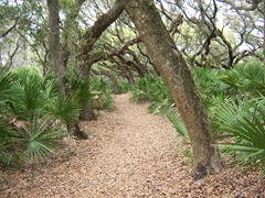 cumberland-island 053