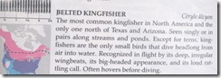 kingfisher info