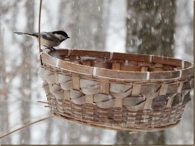 chickadee perched on bird feeder basket excellent