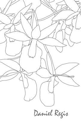 Barkeria scandens traços
