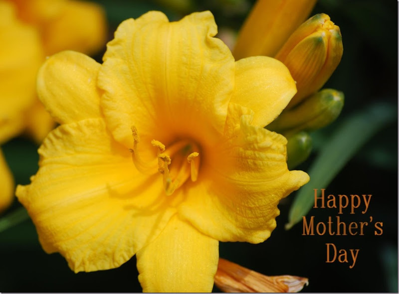 Happy Mother's Day! Sunday, May 12, 2013 ~ 'Gold Lily'