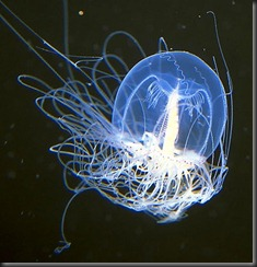 Superpower-Animals-Hydrozoan-7-631