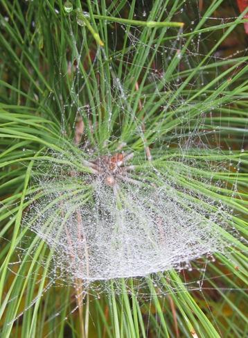 SPIDER WEB (1)