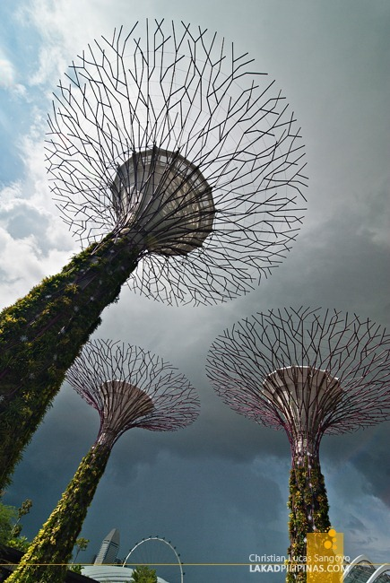 Massive Supertrees at Singapore's Flower Dome
