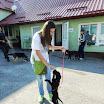 Galerija - Druga pseća tombola i šetnja napuštenih pasa 31.08.2013.