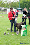 20100513-Bullmastiff-Clubmatch_31190.jpg