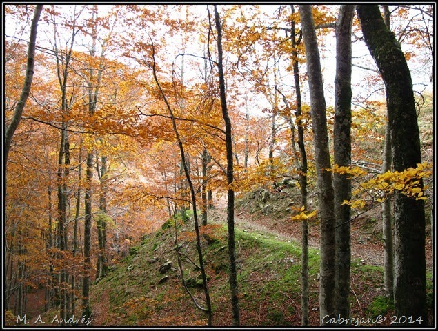 Lantz otoño 055