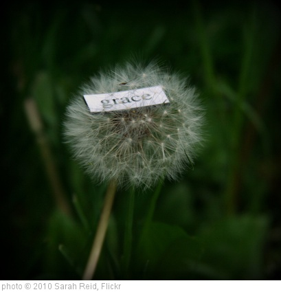 '365::139 - grace' photo (c) 2010, Sarah Reid - license: http://creativecommons.org/licenses/by/2.0/