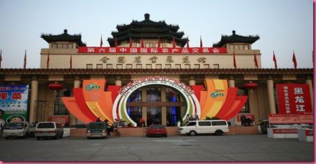 Shangai Antica 5