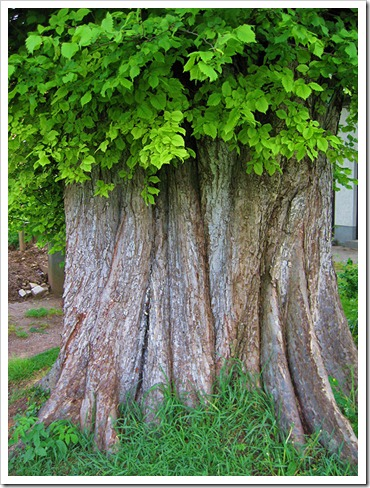 070510_tree