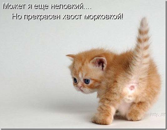 1275829342_kotomatrix_039