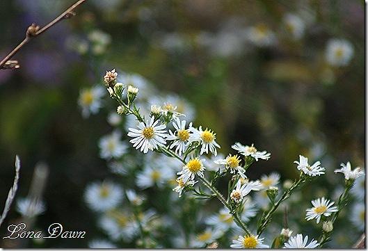 CC_Flowers