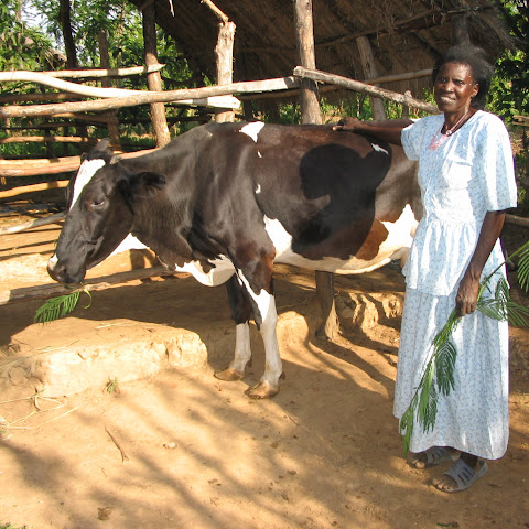 Olinga's mum, Anna-Grace, with their cow.