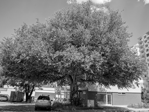 Yılın Ağacını Seçin