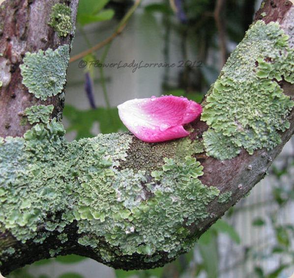 10-04-petal-fungi