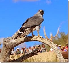AZ Sanora Desert Museum 091