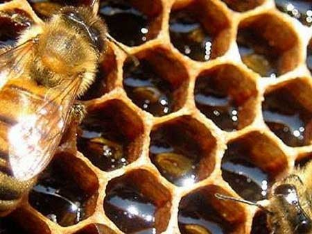 Εθελοντική Ομάδα Δράσης: Συνεχίζονται οι παραγγελίες για το μέλι