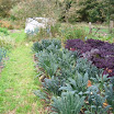 Leeks, and two varieties of kale in the garden